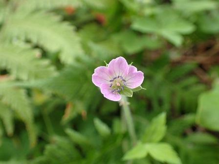 御岳山の花.jpg